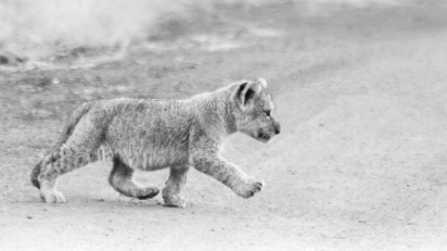 201708 cubs-2